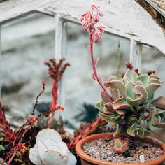 With thirteen Victorian glasshouses, The Walled Nursery at Hawkhurst is like no other nursery I've ever visited. The owners Emma and Monty took on the wonderous and exhausting task of giving this place its magic back in 2010 and, along with their families and volunteers, are doing an amazing job! Being plant obsessed, we love visiting in...  Read more »
