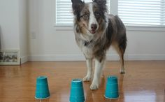 Is your pup smarter than the average Fido? Find out with this IQ test.