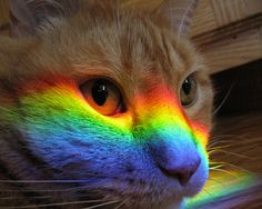 """The rainbow on my cats face is from the sun coming through a window and bouncing off the kitchen chandelier. This only happens for about a month out of the year, but Jordyn loves to lay right in the center of it."""