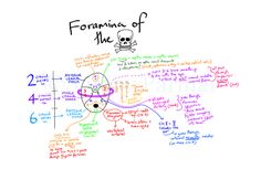 Foramina of the Skull (Visual mnemonic)
