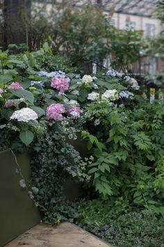 Ura, Garden, Plants, Garten, Lawn And Garden, Gardens, Plant, Gardening, Outdoor
