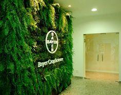 Parede Verde Bayer