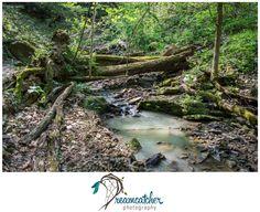 Raccoon Creek - Mineral Springs www.nicdreamcatcher.com ©Nicole Iagnemma