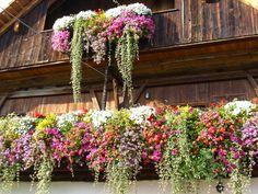 Geranien auf einem Bauernhof in Südtirol (Südtirol, Dolomiten) | Gerani sui balconi di un maso altoatesino (Trentino-Alto Adige, Dolomiti) | Geraniums on balconies of a farm in South Tyrol (Italy, Dolomites) www.stephanshof.com
