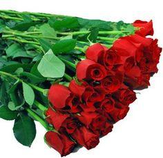 Fresh Long Stem Red Roses for Sale - http://www.wholeblossoms.com/wholesale-roses/long-stem-roses/long-stem-red-roses.html