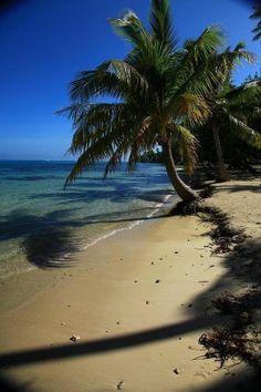 Moorea Beach Palm, Tahiti