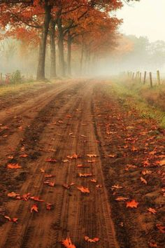 Of all the paths you take in life, make sure some of them are made of dirt ~ John Muir