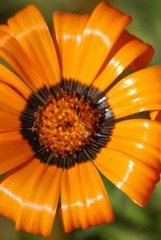orange colored photos