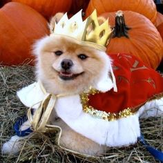 """A lot of our friends out there call Me Sammy's """"master"""". The truth is, it's the other way around, he is MY master:). In any event, many centuries ago, Kings became Kings by brutal force. Sammy became a King by a friendly smile....Oh how the world has changed."""