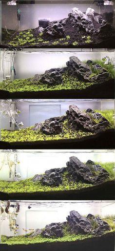 48cm Tank: 1st Scape #aquarium #aquariumidea #fishtank #aquariumideas #aquariumdiy #aquariumfishfreshwater #aquariumsetup