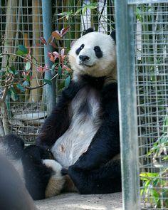 Bai Yun and Yun Zi | Flickr - Photo Sharing!