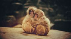 #1564045, monkey category - free screensaver wallpapers for monkey