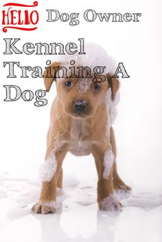 Kennel Training A Dog Tips You Are Going To Benefit From Knowing >>> Click image for more details. Kennel Training A Dog, Crate Training, Dog Training Tips, Stress And Anxiety, Dog Owners, Benefit, Have Fun, Image Link, Advice