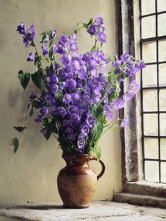 size: Photographic Print: Campanula Poster by Clay Perry : Entertainment Purple Lilac, Shades Of Purple, Lavender Blue, Purple Flowers, White Flowers, Canterbury, Color Photography, Photography Photos, All Things Purple