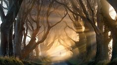 The Dark Hedges, Northern Ireland - Photography by Stephen Emerson. Created by Stuart family in eighteenth century, your function was impress onthe visitors of your mansion, Gracehill House. Today is one of most photographed places in Ireland of North. Tree Tunnel, Magical Tree, Urban Park, World's Most Beautiful, Absolutely Stunning, Fairy Dust, Stock Art, Hedges, Paths
