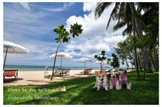 Baan Kood, Prachuap Khiri Khan #Travel #Thailand ++ English language support >> http://ThailandHolidays7.com