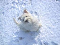 perrito en la nieve
