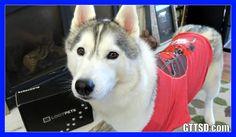 DEADPOOL HUSKIES   Loot Pets Unboxing #LootPets February