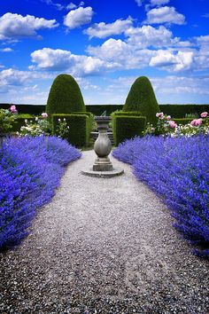 Use boxwood to sculpt geometric shaps against rows of lavender mingled with pink roses for a modern twist.