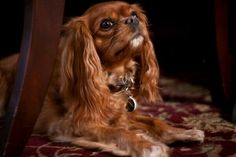Could so be my dog Chewy (rest his soul)
