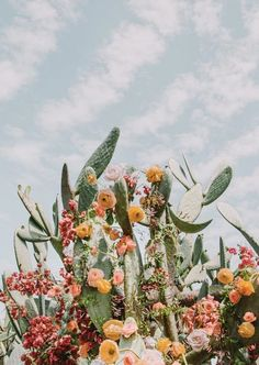 iphone wallpaper cactus April Faves Last Months Faves! Photo Wall Collage, Picture Wall, Aesthetic Iphone Wallpaper, Aesthetic Wallpapers, Cactus Wallpaper, Wallpaper Art, Watercolor Clipart, Flower Aesthetic, Aesthetic Art