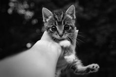 cute cats and kittens | black and white, cat, cute, kitten, kitty - inspiring picture on Favim ...