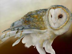 Barn Owl 12 signed fine art print 9X12, Owls, Barn owls, Bird lover gift, Bird prints on Etsy, $30.00