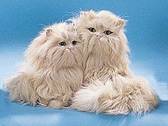2 Persian Cats Bobbing Head Collectible Figurine Kitten Statue Model >>> Continue to the product at the image link.