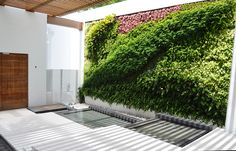 a living, vertical garden lines this entrance way to a private residence.