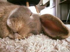 Sleepy bun