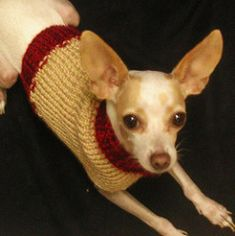 4 ounces worsted weight wool is plenty for a chihuahua.