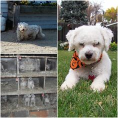 15 Best Puppy Mills Images On Pinterest Puppy Mill Rescue Puppy