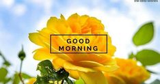 This is the best collection of Good Morning Wishes and Images with Rose to send to your loved ones and spread a smile on their faces. Good Morning Love Text, Good Morning Beautiful Gif, Flirty Good Morning Quotes, Good Morning Sunday Images, Romantic Good Morning Messages, Latest Good Morning Images, Good Morning Roses, Good Morning Msg, Good Morning Images Download