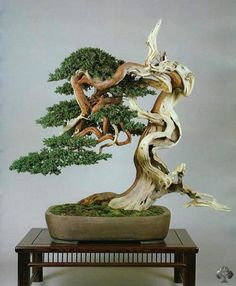 Bonsai is generally a tree or plant that has actually been kept smaller sized than its typical size. The technique to making a bonsai plant is to frequently prune the tree every spring Ikebana, Outdoor Bonsai Tree, Indoor Bonsai, Plantas Bonsai, Deco Floral, Arte Floral, Bonsai Tree Types, Bonsai Trees, Image Zen