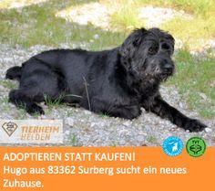 Hugo wartet seit 2010 im Tierheim Surberg auf ein neues Zuhause  http://www.tierheimhelden.de/hund/tierheim-surberg/schnauzer_mix/hugo/6320-0/  Hugo ist verträglich mit anderen Hunden. Katzen oder Kinder sollten im neuen Haushalt jedoch nicht vorhanden sein.