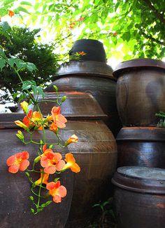 ... Korean Art, Mimosas, Watercolor Paintings, Adventure, Purple, Drawings, Garden, Artist, Flowers