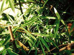 #art #artwork #写真 #photography #アート #photo #花 #植物 #flowers #風景 #landscape #葉紋