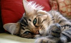 Meet the Cat Who Can Sense Death http://www.care2.com/greenliving/meet-the-cat-who-can-sense-death.html