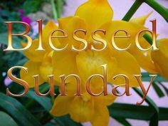 Have A Blessed Sunday. Sunday Morning Quotes, Good Morning Tuesday, Happy Sunday Quotes, Morning Love, Good Morning Friends, Good Morning Good Night, Good Night Quotes, Happy Friday, Weekend Greetings
