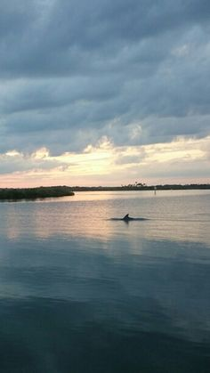 Dinner at J.B.'s fish camp in Nsb, always see some sort of wildlife here and always get the best pics at sunset.