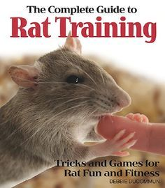 """Read """"The Complete Guide to Rat Training"""" by Debbie Ducommun available from Rakuten Kobo. The Complete Guide to Rat Training teaches you how to have fun and enhance the relationship you share with your pet rat. Rat Cage Diy, Pet Rat Cages, Dog Clicker Training, Dog Training, Training Tips, Training Videos, Animals And Pets, Funny Animals, Cute Animals"""