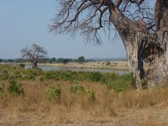 Beautiful scenery @ #Ruaha National Park in #Tanzania. Check out the user reviews of Ruaha NP, photo by Cathy