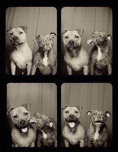 A cabine dos cães apaixonados