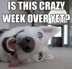 Is this week over yet funny quotes cute memes quote dog weekend days of the week weekend quotes