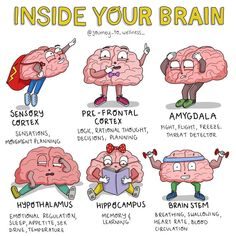 Brain Anatomy, Anatomy And Physiology, Mental And Emotional Health, Social Emotional Learning, Hippocampus Brain, Brain Illustration, Brain Facts, Brain Science, Emotional Regulation