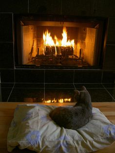 cat sitting by the fire~
