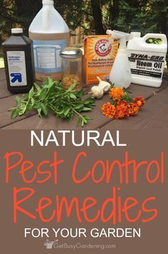 I am so excited to find a post that has so many ideas for natural pest control remedies for my garden!! I am totally going to try these! I refuse to use toxic chemical pesticides in my gardens!