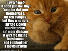 You deserve a reward for being so good all day! - LOLcats is the best place to find and submit funny cat memes and other silly cat materials to share with the world. We find the funny cats that make you LOL so that you don't have to. Funny Animal Memes, Cute Funny Animals, Animal Quotes, Funny Animal Pictures, Cute Baby Animals, Cute Cats, Animal Humor, Animal Pics, Wild Animals