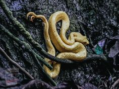 Mummified Body, Milk Snake, Types Of Snake, All About Snakes, Coral Snake, Pet Cemetery, Animals Amazing, Scary Places, Animal Control