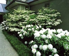 """I absolutely love the """"All White"""" garden.  Very elegant and great for a peaceful night in the garden.  Be sure to include some fragrant flowers such as jasmine and gardenia!"""